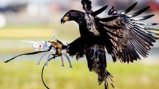 2-bbc-eagles-drones